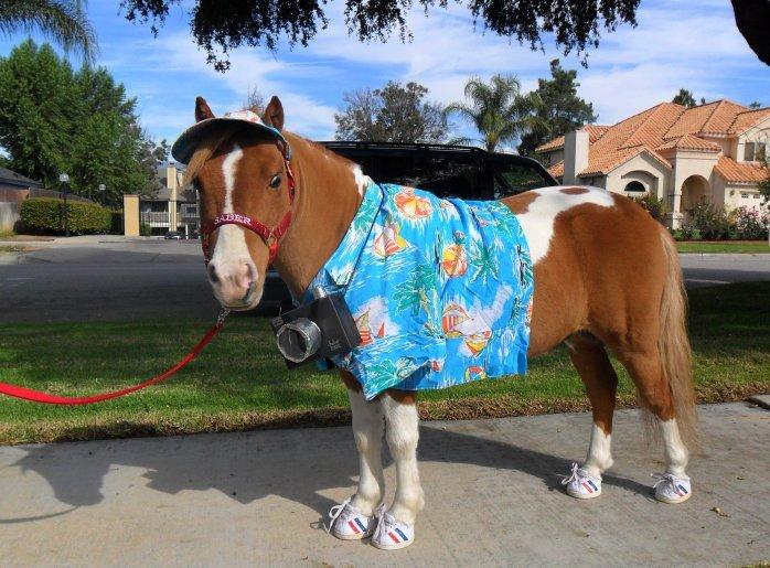 Aloha Beach Costume for Drafts Horses or Ponies Colorful   Mini Horse Costume
